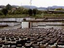 鹿児島・黒酢の壷