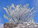鶴見岳樹氷