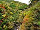 樅木の吊橋画像