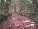 笠山椿群生林画像