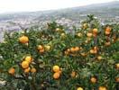水本オレンジガーデン