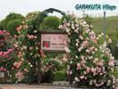 冠山総合公園のバラ