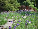 平川動物公園 花しょうぶ祭